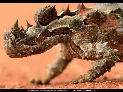 Thorny Devil